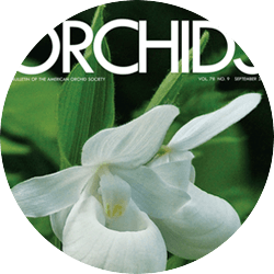 Orchid Pests and Diseases